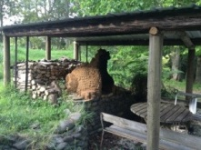 The Fire Dragon pizza oven. We installed the roof over this bad boy!