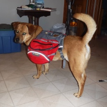 Hunter is NOT impressed with his backpack!
