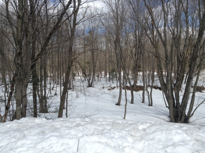 April 9th, 2014. Still 2+ feet of snow in the woods here in Maine!