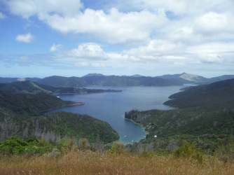 Looking down at the Queen Charlotte Sound. Seriously, they paid us to work here