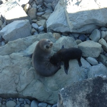 Baby and momma fur seals. We literally stumbled upon these guys on the side of the highway.