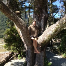 Lindsay just hanging out in a tree in Milford