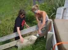 Feeding fletch the lamb, so cool!