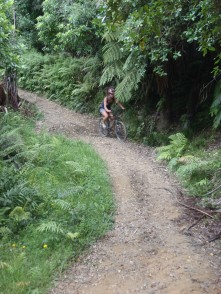 Going for a bike ride along the Queen Charlotte Track