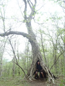I found a tree, it looked nice.