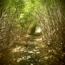 "Hunter walking through the ""Green Tunnel"""