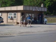"Lindsay, Hunter, George & Bear walking the ""AT"" in Hot Springs, NC"