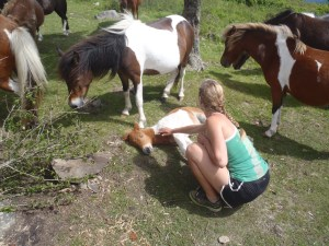 Lindsay petting the ponies in the Grayson Highlands!