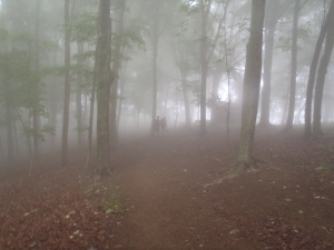 The eerie, misty forest on a cool Appalachian morning