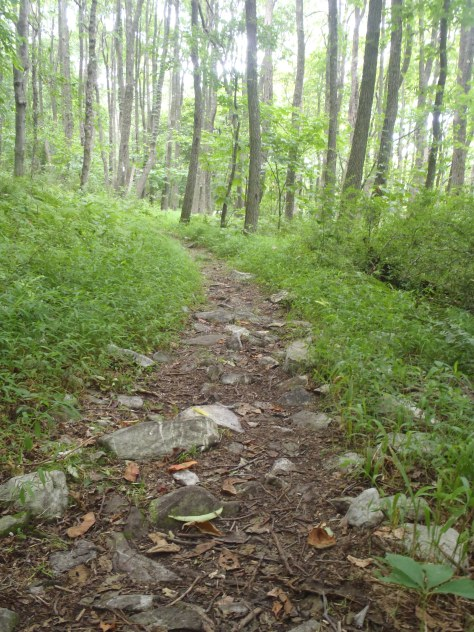 A typical section of trail in the 80 mile rocky section.