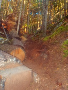 A tree fell parallel into the trail and set up an awesome fall photo possibility.